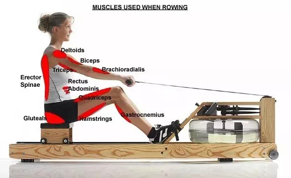 How Do Rowing Machines Work?